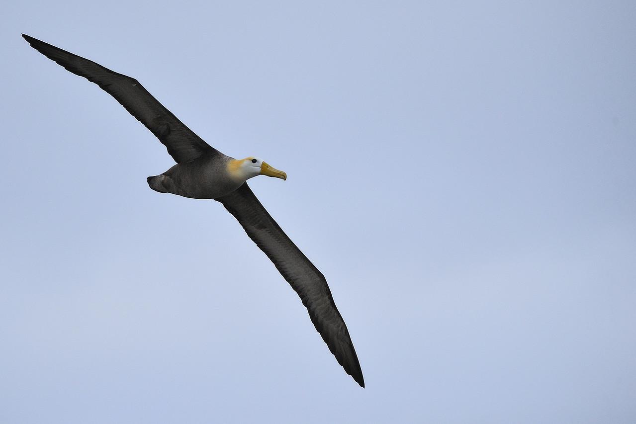 Galapagos Jul 2008 023
