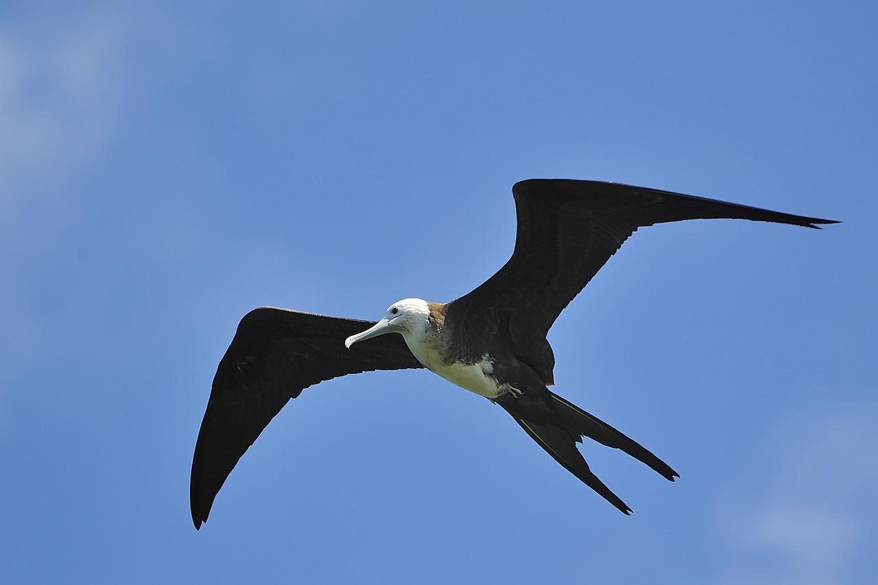 Galapagos Jul 2008 031