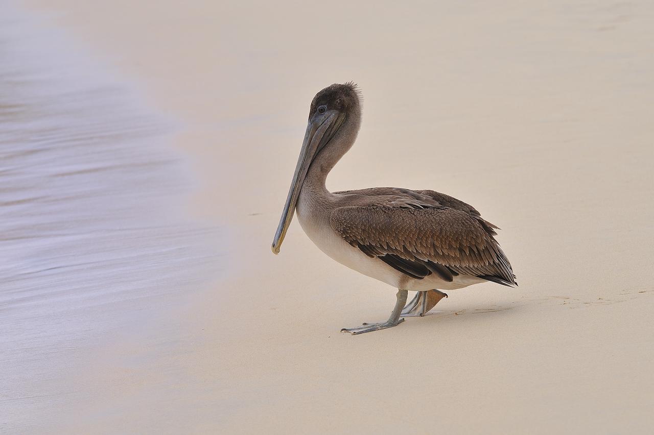 Galapagos Jul 2008 028