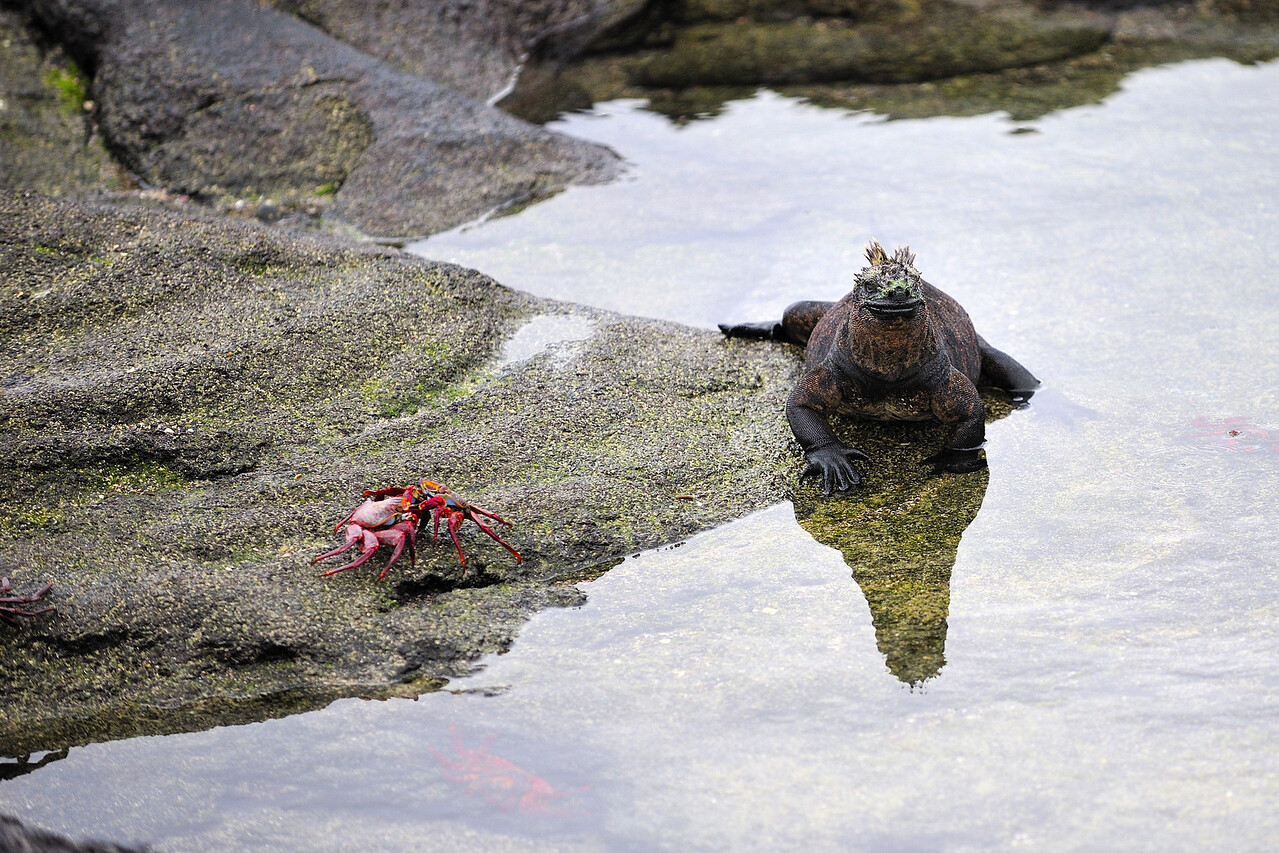 Galapagos Jul 2008 037