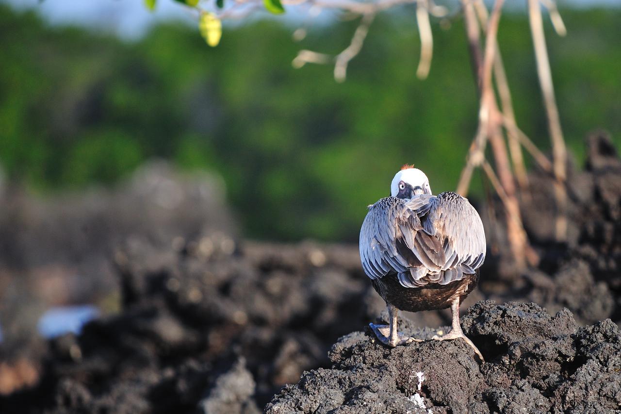 Galapagos Jul 2008 034