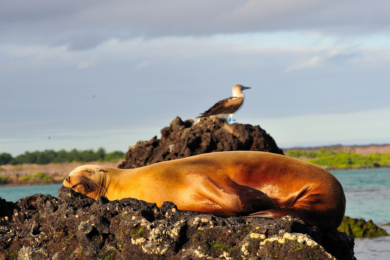Galapagos Jul 2008 033