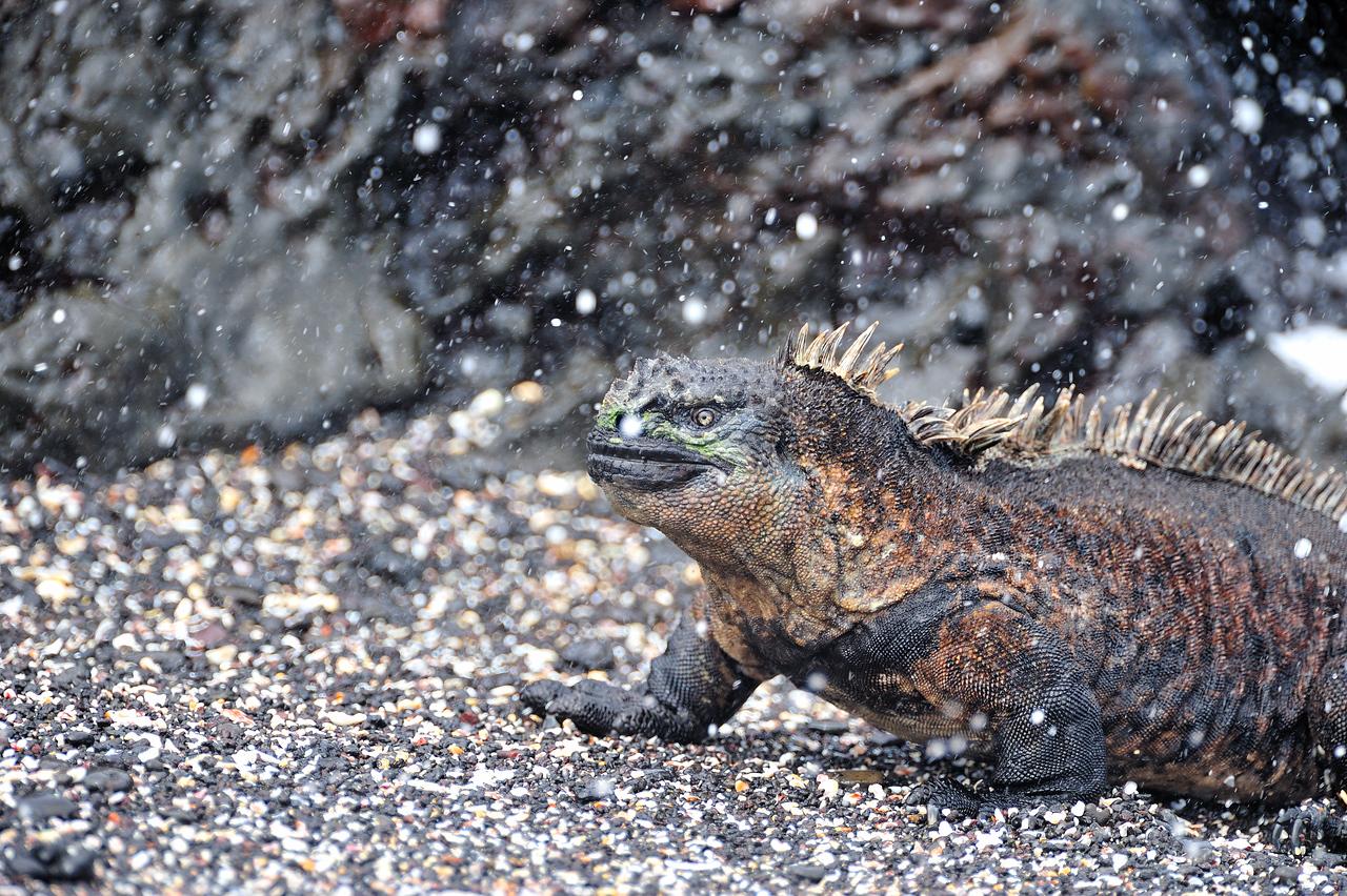 Galapagos Jul 2008 036