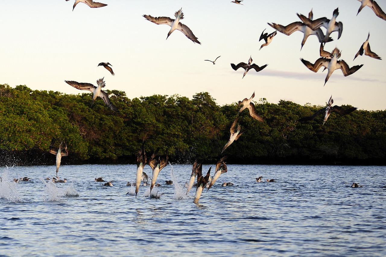 Galapagos Aug 2008 043