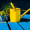 Green plants on a blue picnic table with a vintage yellow watering can.