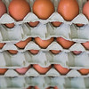 Trays of stacked fresh eggs.