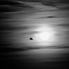 A lone bird in flight flys by the sun.  Black and White.