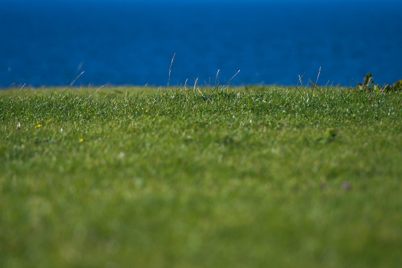 Green grass and blue ocean in the background.  Shallow depth of field image.  Summer in Ireland.