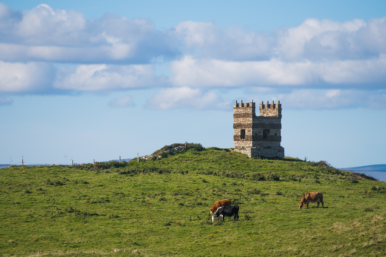 Cows graze in an Irish field with an ancient tower in the background.