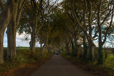 The Dark Hedges trees and road, Northern Ireland