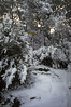 Snow in Sestri Levante, on the footpath to Punta Manara.<br /> <br /> Neve a Sestri Levante sul sentiero per Punta Manara.