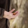 """Le fruit de chene,<br /> Hommage ˆ LÕHomme qui plantait des arbres<br /> RŽalisateur : Alejandro JimŽnez <br /> <br /> ChrisKralik@gmail.com  <br />  <a href=""""http://www.chriskralik.com"""">http://www.chriskralik.com</a><br /> 514-557-4167"""