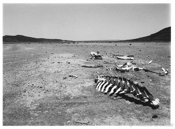 Grand Bara, Djiboutian desert