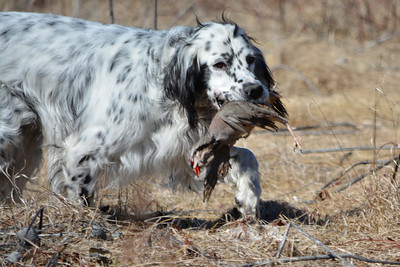 Setters Point & Maine Bird Dog Adventures Photoshoot
