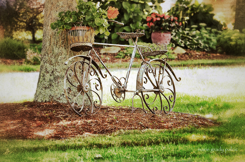 Bicycle...decorative beauty in  village of Barnstable...