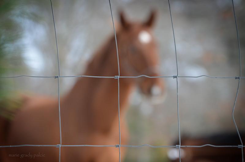Fence...Marstons Mills