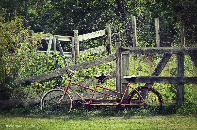 Bicycle...a bicycle built for two in West Barnstable