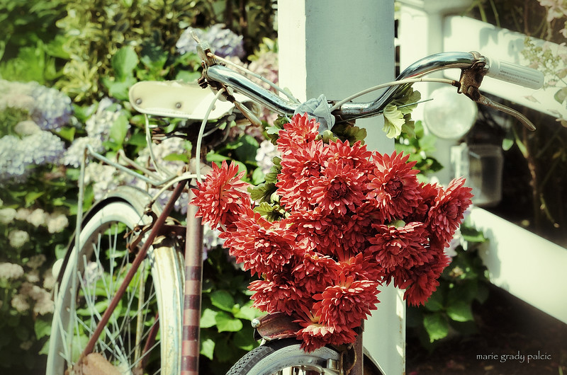 Bicycle...Flower basket at the Plum Porch in Marstons Mills