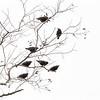 seven blackbirds...village of Barnstable
