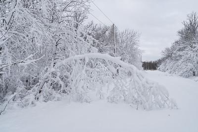 Tree Bent By Snow
