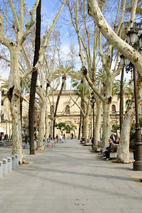 Plaza Nueva (2) I'm sure this avenue of trees looks spectacular in the summer.