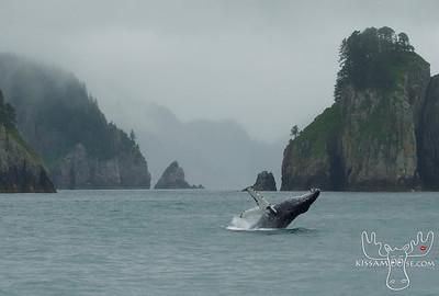 Humpback, Humpback Whale, Kenai Fjords National Park, whale