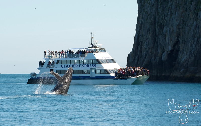 Humpback, Humpback Whale, Kenai Fjords National Park