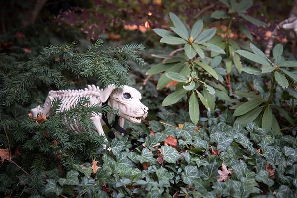 Bouchard-Halloween-16