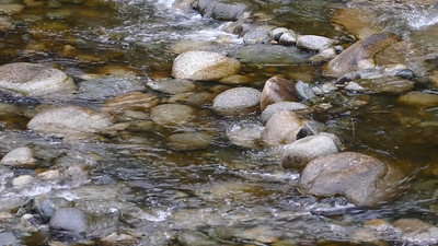 Seymour River salmon migration