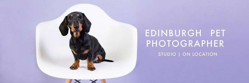 edinburgh pet photographer studio | on location