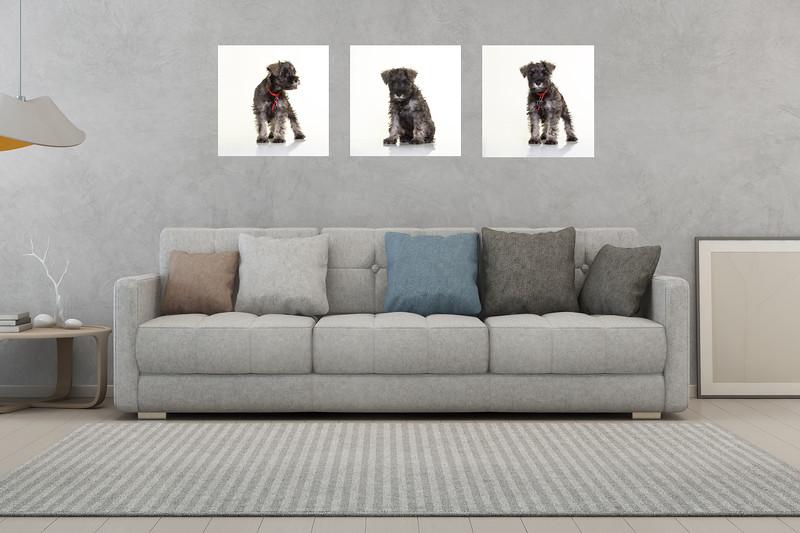 edinburgh dog photographer livingroom