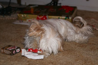 Shaiti loves to unwrap presents....no matter who's present it is, if it is wrapped... she wants to unwrap.