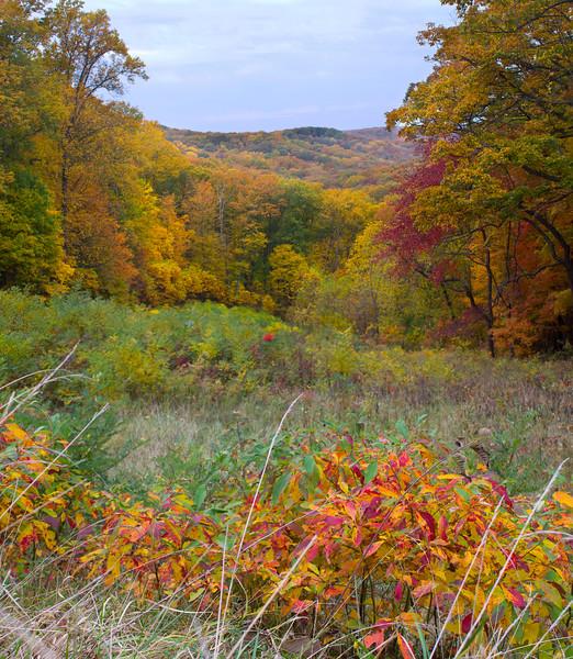 0494-Fall Trees Overlook