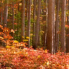 1158-Trees with Fall Foliage