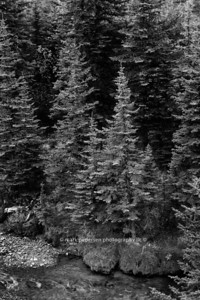Forest-River-2011-bw