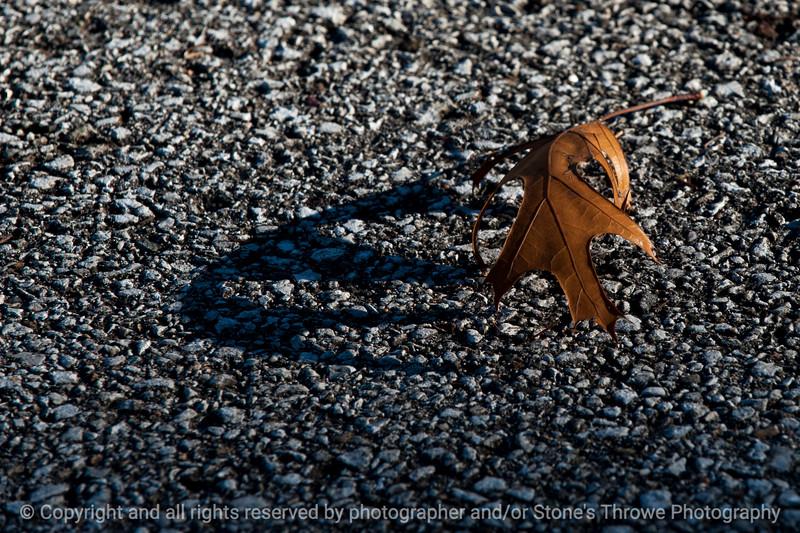 leaf_shadow-wdsm-01nov15-18x12-203-5745