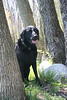 dog, park, water, frisbee, labrador retriever, fetch, ball, Shaggy Pines, Grand Rapids