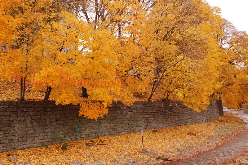 Trees along Shamokin Creek.