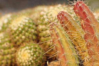 Phoenix Desert Botanical Garden (20121111)