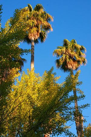 Overfelt Gardens Park, San Jose, CA (20110918)