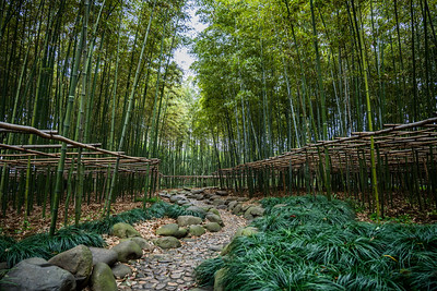 Bamboo forest in Shanghai.