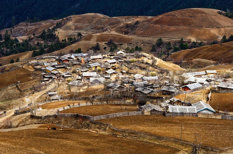 """Paysans tibétains labourant leur champ avec un dzo (croisement de yak et de vache) dans les environs de Zhongdian (renommée """"Shangri-La""""). Province du Yunnan/Chine"""