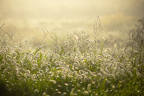 Early Grass #1