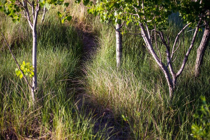Seagrass Trail