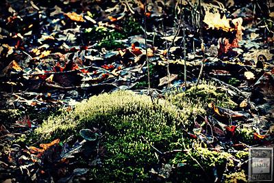 Spring Forest Floor III