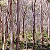 Boranup Forest, Margaret River