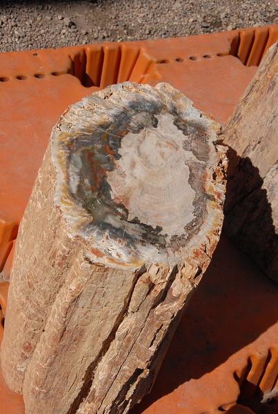 Petrified wood.