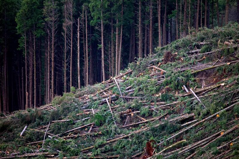 Fallen Trees - Torn Earth