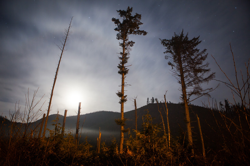 Night Light at the Edge of Clearcut