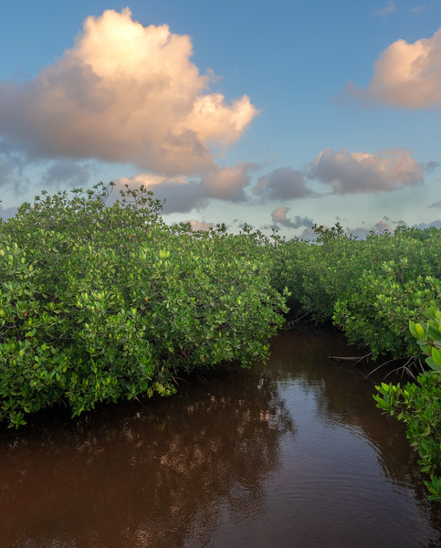 Mangrove Channels and Clouds Lit by Sunrise, 6:24am, Feb 20 2019